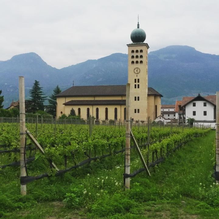 Hotel-Schwarzschmied-vineyards