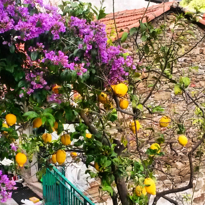 Lemon tree in Cinque Terre