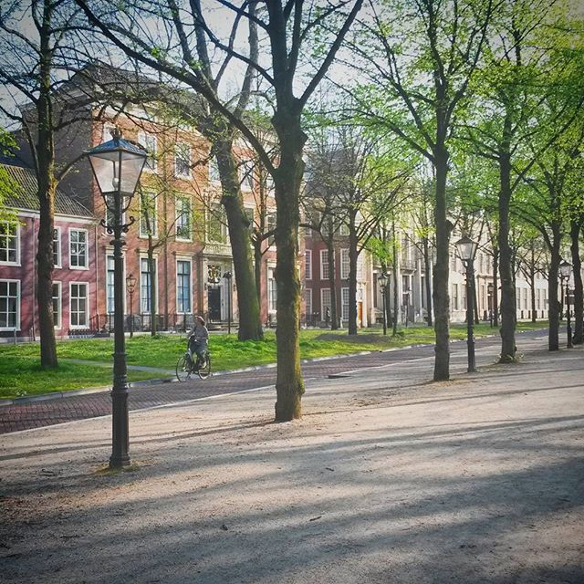 Lange Voorhout's tree-lined alley